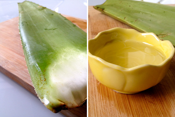 aloe vera and coconut milk shampoo